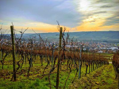 Panorama von Eibelstadt aus den Weinbergen